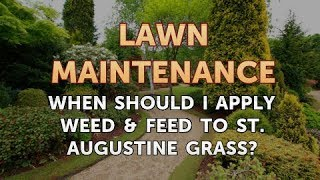 When Should I Apply Weed & Feed to St. Augustine Grass?