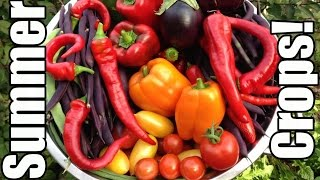 Time to Plant Tomatoes, Peppers & Eggplants! (Zone 5)