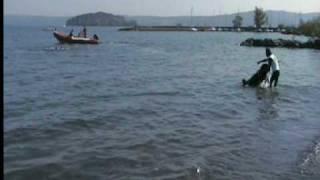 preview picture of video 'Cani da Salvataggio - Unità cinofile S.A.U.C.S. - S.A.T. a Marta'