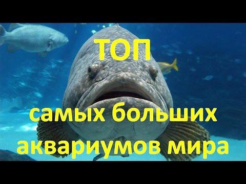 ТОП самых больших аквариумов мира