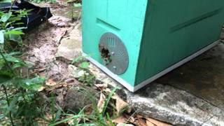 Honeybees Working Even In The Rain