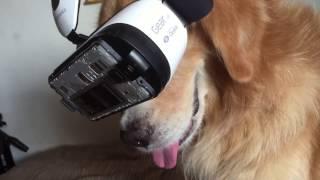 Dog Tries VR