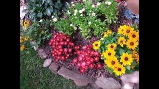 🍀🌻🌷 Маленький цветник - Ландшафтный дизайн своими руками