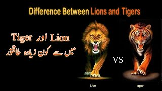 lion vs tiger | Compression of lion and tiger | lion aur tiger me kon ziyada taqatwar |