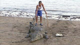 Ловля крокодила на средней волге