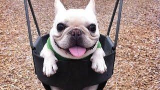 Lustige Hundevideos