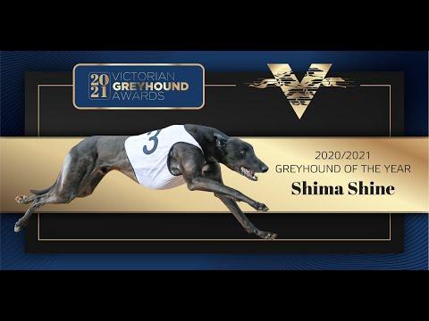 2021 Victorian Greyhound of the Year: Shima Shine