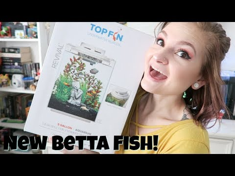 Top Fin Waterfall 5 Gallon Tank Unboxing/Setup! + My New Betta Fish | Alyssa Nicole |