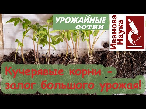 Не упустите шанс получить крепкую рассаду! Магнит для корней - самый простой способ.