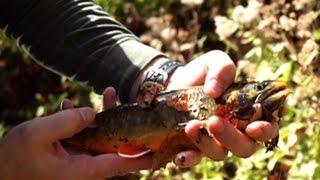 Рыбалка в черногории на реках