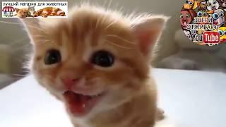 Лучшие забавные моменты с кошками