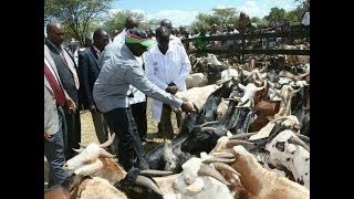 KIMALEL GOAT AUCTIONING: DP Willian Ruto buys 1000 goats at Kshs. 12 Million