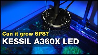 Will Kessil's small footprint = small PAR output? Not if you set them up like this!