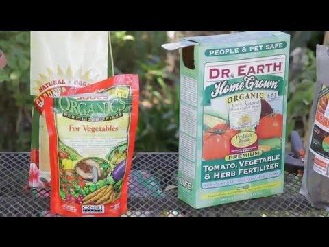 , title : 'How Often Should You Fertilize Tomato Plants? : Garden Space