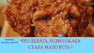 02.02.18 Собака мало ест (пассивное состояние собаки)