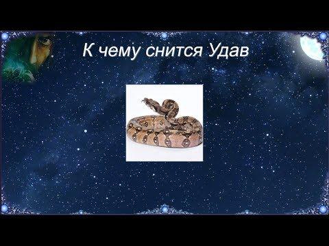 К чему снится Удав (Сонник)