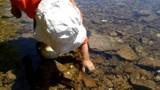 Как ловить крабов голыми руками