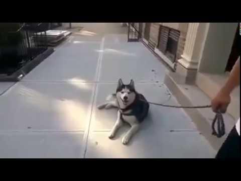Когда собакен не хочет домой