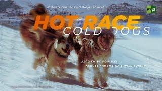 Hot Race, Cold Dogs: 2,100 km by dog sled across Kamchatka's wild tundra | Kholo.pk