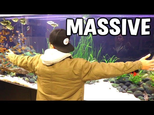 MASSIVE 800 Gal. Planted Aquarium With MONSTER FISH!