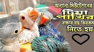 How To Take Care of Other mutation Indian Ringneck Parrot Baby || টিয়াপাখি