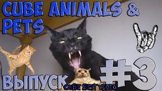 Подборка лучших видео про животных по версии CUBE BEST VIDEO Выпуск #3