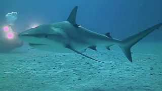 preview picture of video 'Shark Dive Eleuthera Bahamas Ocean Fox Diving'
