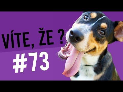 #73 ● VÍTE, ŽE...?