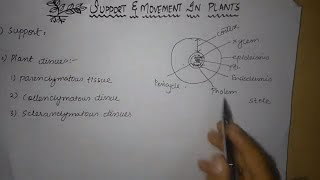Support & Movement In Plants