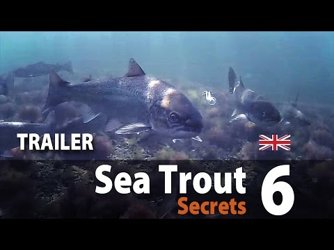 Sea Trout Secrets