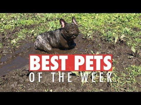 Best Pets of the Week | April 2018 Week 3