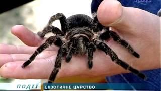 Більше 500 павуків тримає вдома коломиянин