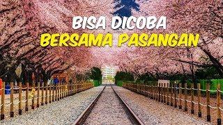 5 Destinasi Wisata Romantis di Korea Selatan, Lihat Keindahan Bunga Sakura di Jinhae Gunhangje