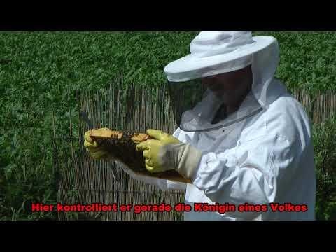 Bienen in Bödexen