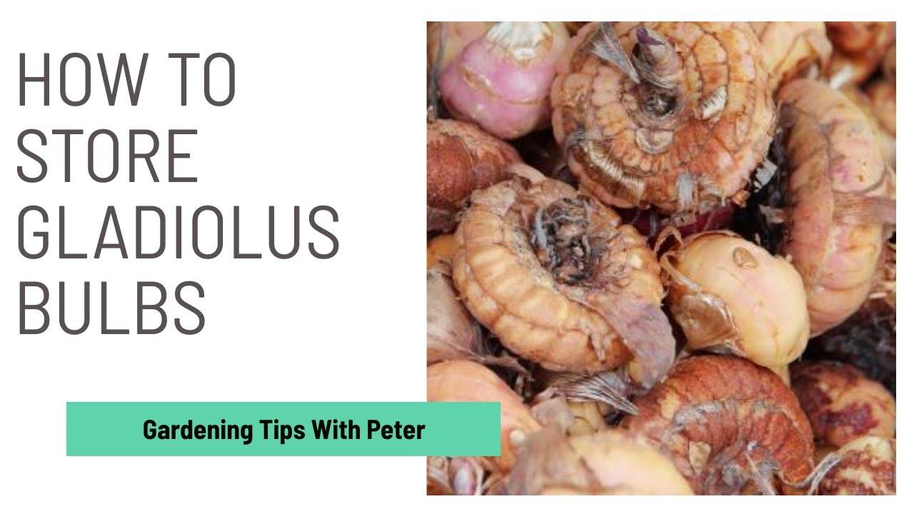 Storing Gladiolus Bulbs