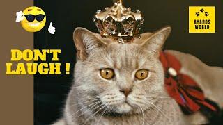 Cute and funny cat videos -Tik Tok #45
