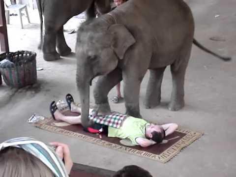 slonovi seks videa mame teen porniće