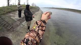 Рыбалка на магистральном приазовском канале лунного окуня