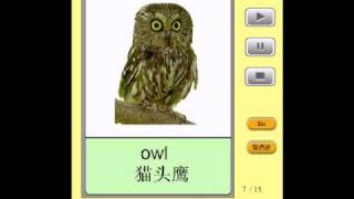 普通话闪卡 - 动物 Mandarin Flashcards - Animals