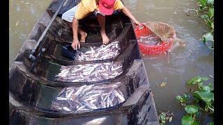 Thả Lưới Cá Út Trên Sông Lớn Trúng Ngay ổ Cá Dính Gỡ Không Kịp