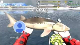 Ultimate fishing simulator ловля осетра