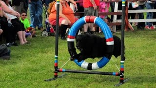 preview picture of video '2014 Renfrew Fair- Cricket's Canine Country Club Demo Team HOTDOGGERS'