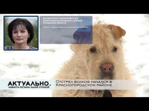 Актуально Псков / 12.01.2021