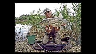 Как ловить амура на прудах в августе