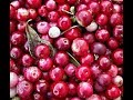 Cranberries 101-About Cranberries and Their Health Benefits