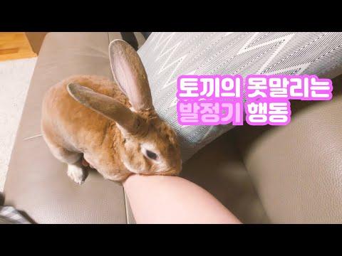 , title : '【토끼 키우기】 반려동물의 발정기에는 어떻게 대처하시나요? (주체할 수 없는 토끼의 성욕, 짝짓기 경쟁, 영역 보호본능)'