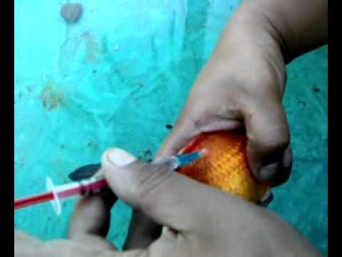 Insulinpatrone verwendete