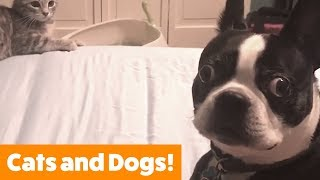 Cutest Dogs and Cats Playing | Funny Pet Videos