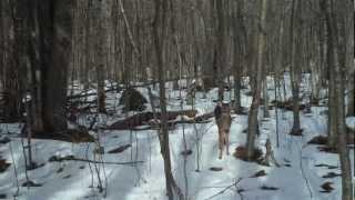 Trail Camera Wildlife Mysteries   Kholo.pk