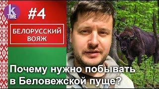 Беловежская пуща: яркие пейзажи и дикие звери - #4 Белорусский вояж